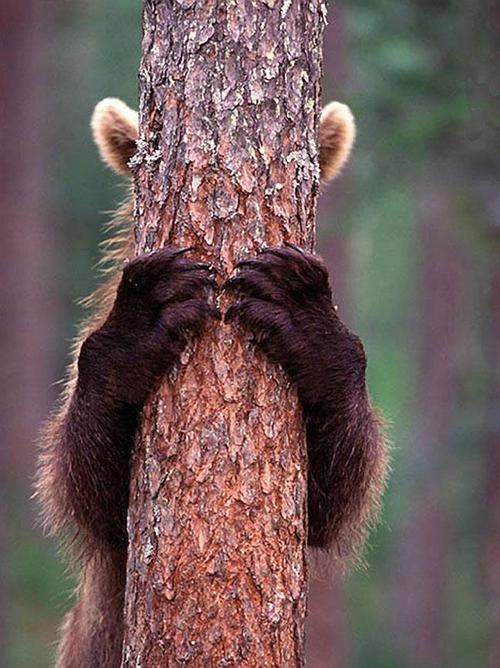 peek-a-boo-bear-cub