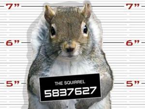 squirrel-mugshot