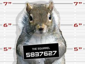 squirrel-mugshot